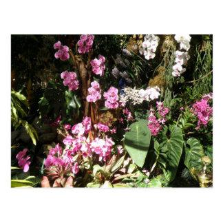 Flores de Orquideas Cartão Postal
