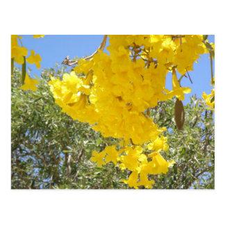 Flores de Puerto Rico Cartão Postal