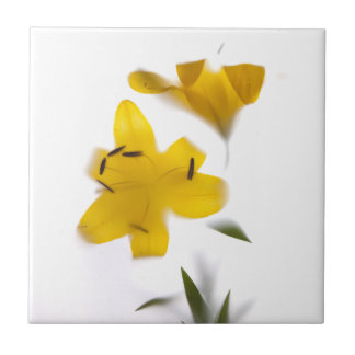 Flores de sombra -1