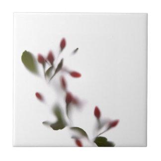 Flores de sombra -2