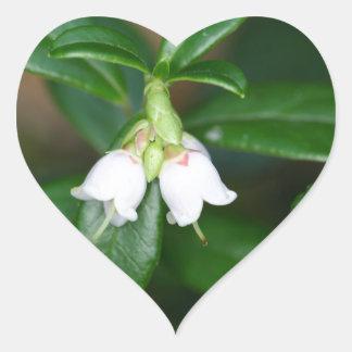Flores de um lingonberry selvagem (Vaccinium Adesivo Coração
