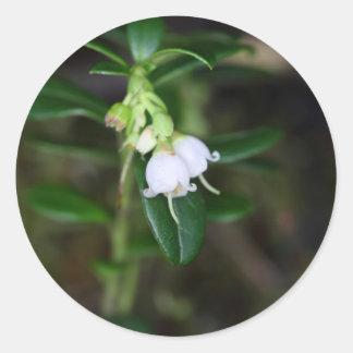 Flores de um lingonberry selvagem (Vaccinium Adesivo Redondo