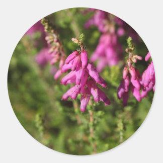 Flores de uma charneca de Dorset (cilaris de Adesivo Redondo