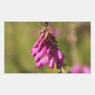 Flores de uma charneca de Dorset (cilaris de Adesivo Retangular