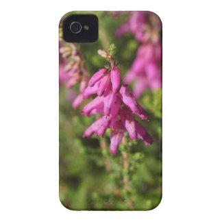 Flores de uma charneca de Dorset (cilaris de Capinha iPhone 4