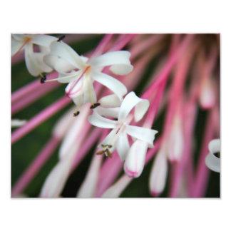 Flores delicadas impressão de fotos