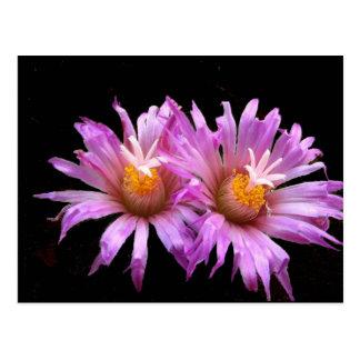 Flores do cacto no cartão