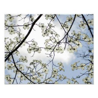 Flores do Dogwood e céu azul Fotografias