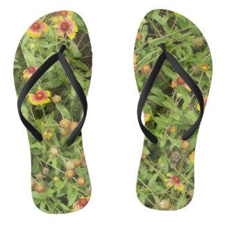 Flores do Gaillardia para seus chinelos