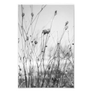 Flores do inverno impressão de foto