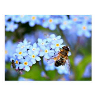 Flores do miosótis com Hoverfly Cartões Postais