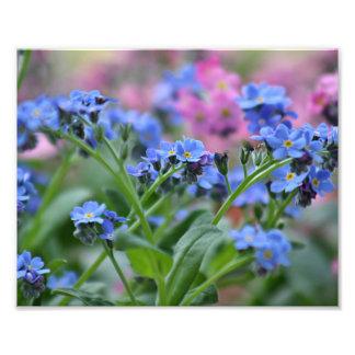 Flores do miosótis foto