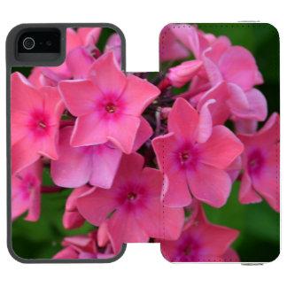 Flores do Phlox do rosa quente