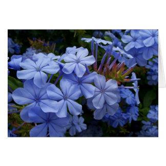 Flores do Plumbago Cartão Comemorativo