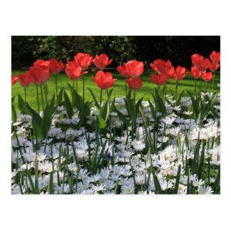 Flores do primavera cartão postal