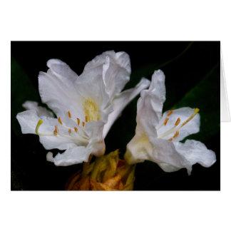 Flores do rododendro cartão