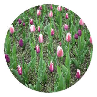 Flores do roxo das tulipas convite quadrado 13.35 x 13.35cm
