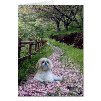 Flores do roxo do cartão de Shih Tzu