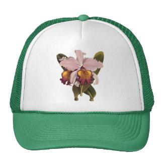 Flores do vintage, orquídea roxa tropical de boné