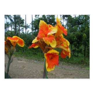 Flores em plantas, Costa Rica. Cartão Postal