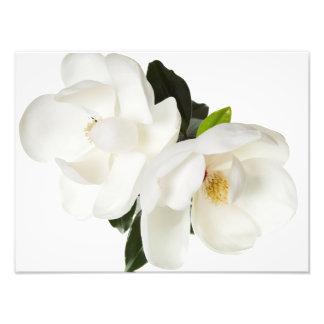 Flores florais das magnólias brancas da flor da impressão de foto