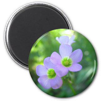 Flores Imãs