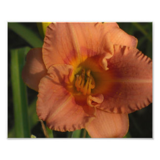 Flores Impressão De Foto