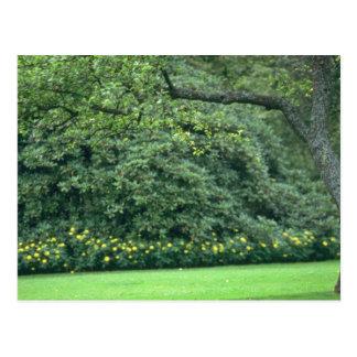 flores Manicured amarelo das hortaliças Cartão Postal