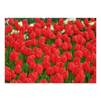 Flores misturadas das tulipas convites personalizado