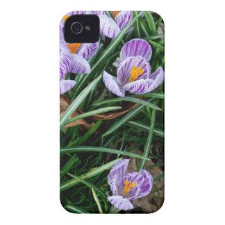 Flores na grama capinhas iPhone 4