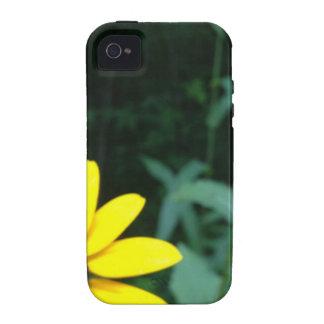 flores nas madeiras capinhas iPhone 4/4S