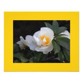 Flores no branco foto arte