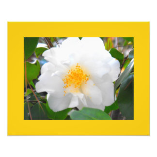 Flores no branco e no amarelo foto artes