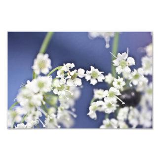 Flores pequenas foto arte