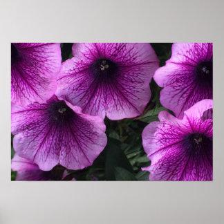 flores pôster