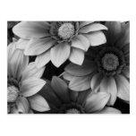 Flores preto e branco cartoes postais