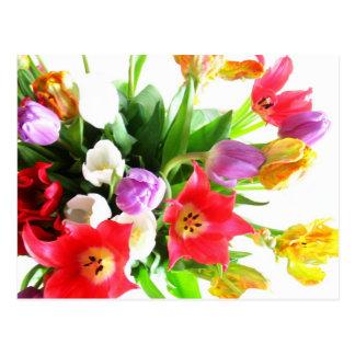 Flores românticas da tulipa cartão postal