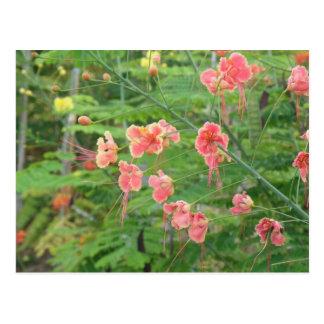 Flores Silvestres Cartão Postal