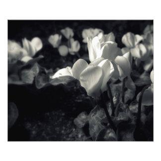 Flores sob o luar impressão de foto