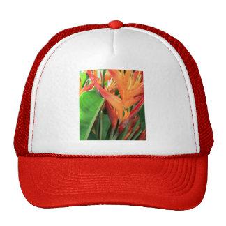 Flores tropicais brilhantes de Heliconia Boné