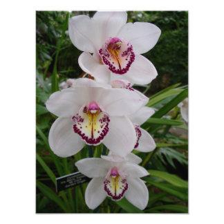 Flores tropicais elegantes das orquídeas brancas impressão de foto