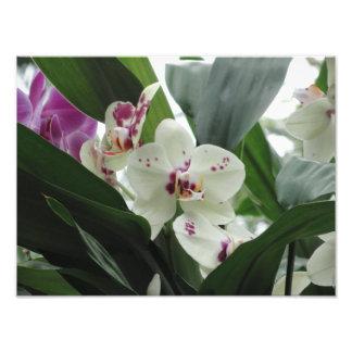 Flores tropicais roxas e brancas fotografia