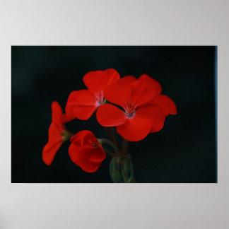 Flores vermelhas contra o poster preto do fundo