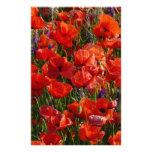 Flores vermelhas da papoila papeis personalizados