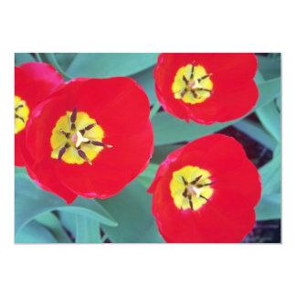 Flores vermelhas da tulipa convite 12.7 x 17.78cm
