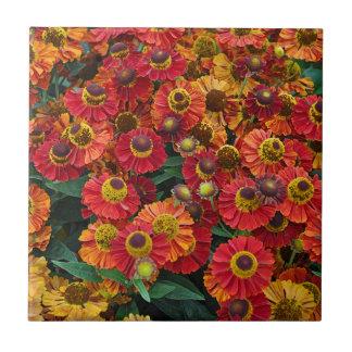 Flores vermelhas e alaranjadas do helenium