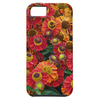 Flores vermelhas e alaranjadas do helenium capa tough para iPhone 5