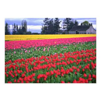 Flores vermelhas e amarelas do campo da tulipa convite personalizado