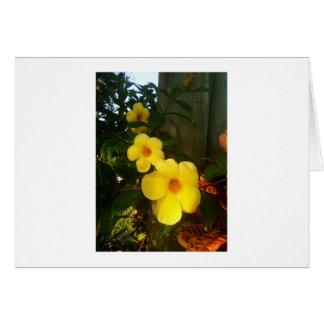 Floresça o jGibney 2014 amarelo da praia do cacau Cartões