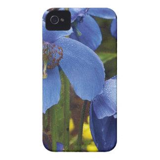 florescem as videiras do jardim das pétalas das capinhas iPhone 4
